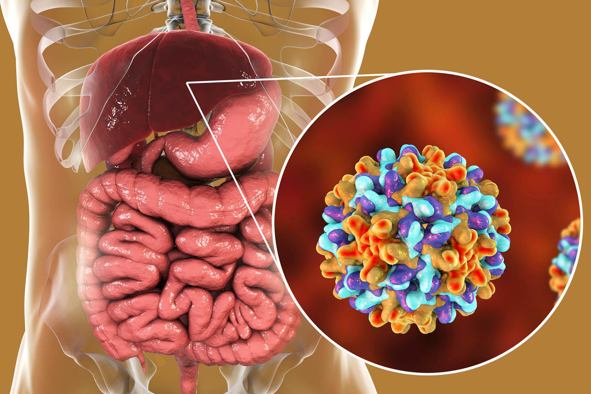 TÌM HIỂU] Vi-rút viêm gan B sống bao lâu trong các môi trường?